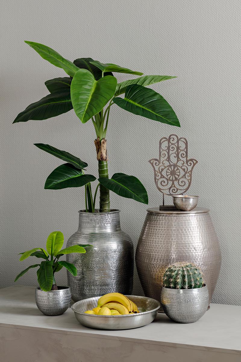 Interiør Planter: Plante jinzhuan gronn. Slik fungerer ...
